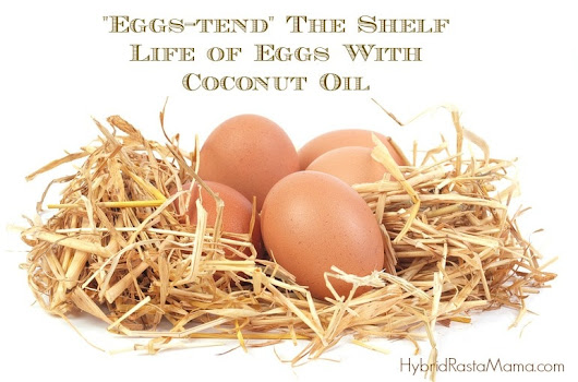 How To Extend The Shelf Life of Eggs With Coconut Oil - Hybrid Rasta Mama