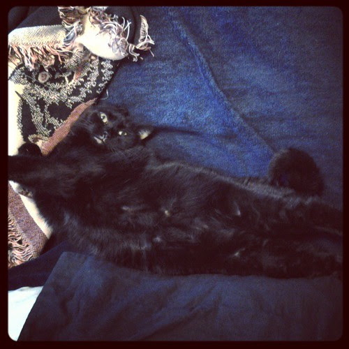 Julio demonstrates feline dignity.  #Julio #cat