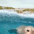 Die Nordsee - Unser Meer - Bilder