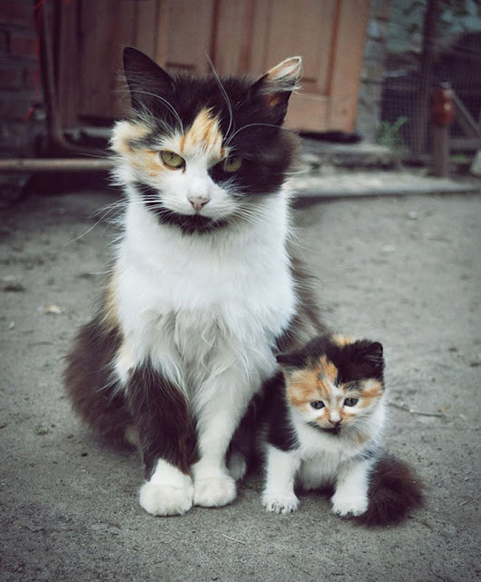 34 Animals With Their Adorable Mini-Me Counterparts