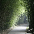 The Bamboo Grove  » Blog Archive   » Successful Intro to Aikido Workshop, June 28, 2014