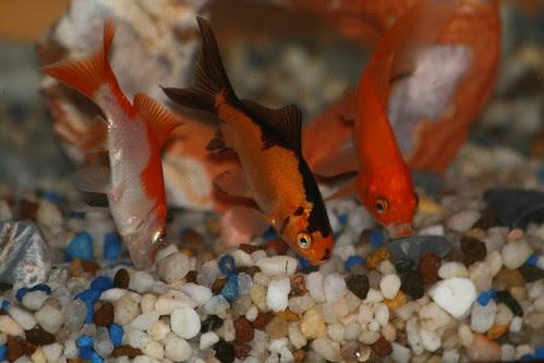 Triple play fish
