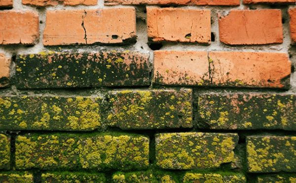 How to Handle Chimney & Fireplace Mold