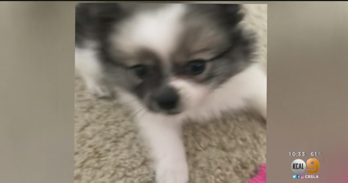 Anaheim Craigslist Pets