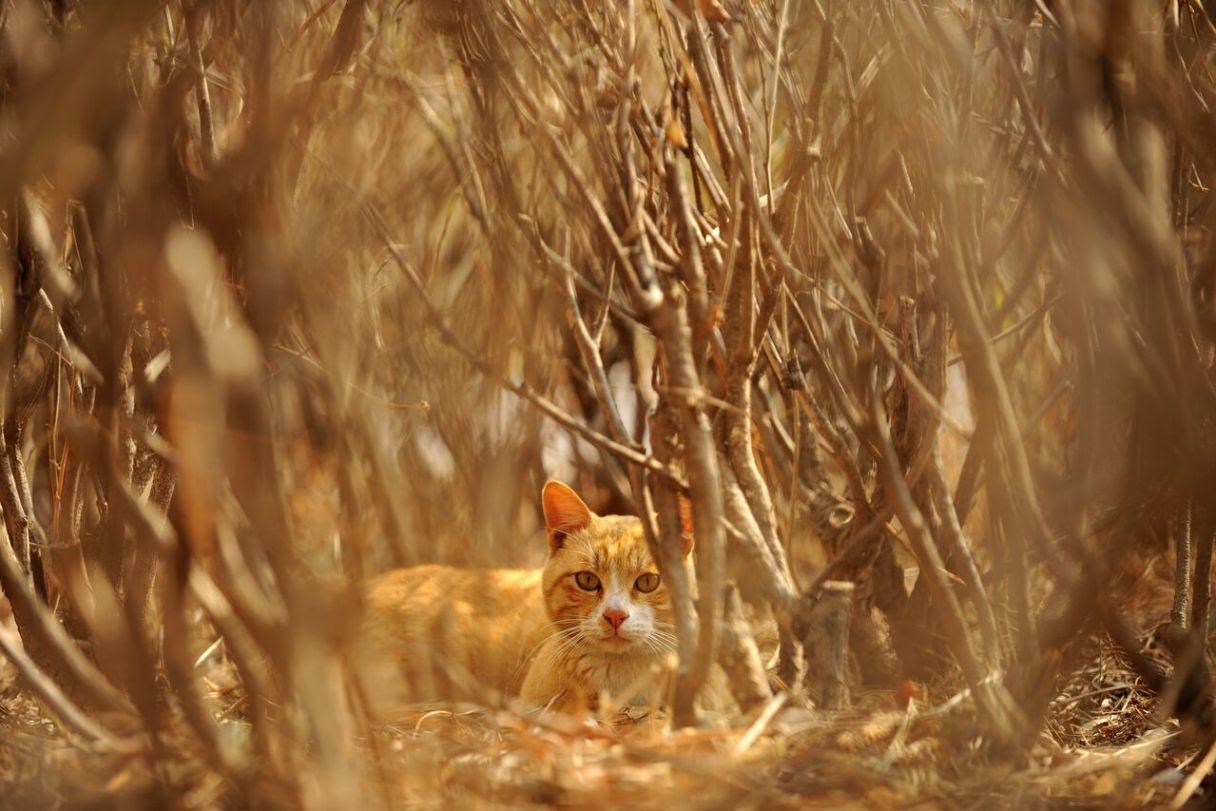 本來在天台生活的貓。(云谷 攝)