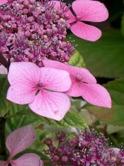 fleurs, 30 juillet 2005