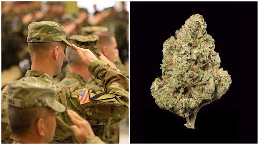 Inside the Fight to Study Marijuana for Vets with PTSD