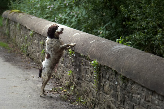 The Haunted Bridge Where Dogs Jump To Their Death - Three Million Dogs