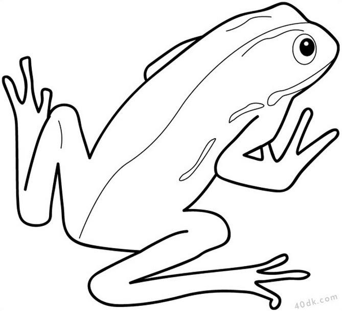 40dkcom Kurbağa Boyama Sayfası 47 40dk Eğitim Bilim