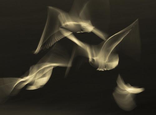 Wings por 1963chris