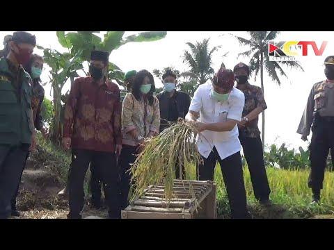 Desa Sukasari Cianjur Menuju Desa Maju