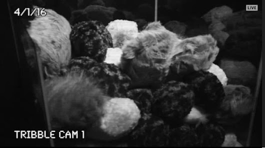 "Smithsonian on Twitter: ""We know you love animal live streams, so @airandspace set up the tribble cam  #TribbleTrouble """