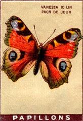 papill 12