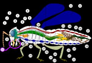 Mengenal Hewan Serangga