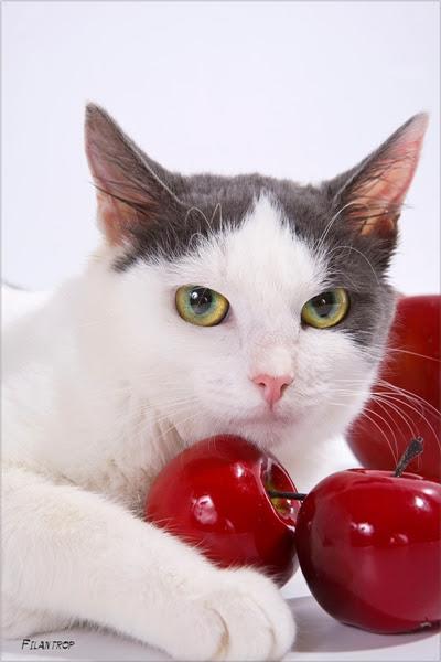 кошки история позитив добро