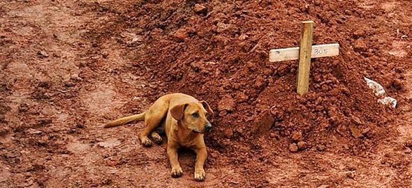 perierga.gr - 10 φωτογραφίες που σόκαραν την ανθρωπότητα!
