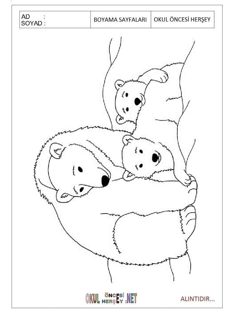 Kutup Ayısı Boyama Sayfaları