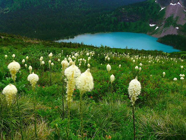 P1170100 Beargrass and Grinnell Lake, Glacier National Park
