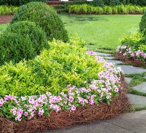 Style Advice Southern Living Plants