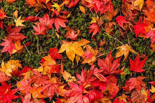 Tips for Photographing Autumn Colors