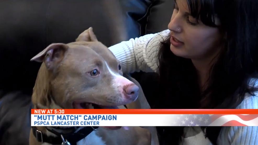 Lancaster Dog Adoption