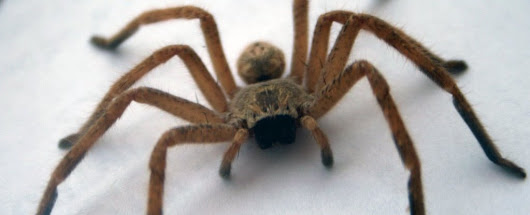 Police Force Mobilised After Man Overheard Violently Screaming at a Spider