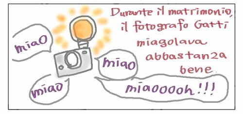 Durante il matrimonio, il fotografo Gatti miagolava abbastanza bene. Miao, miao miaaaoooooh!!!