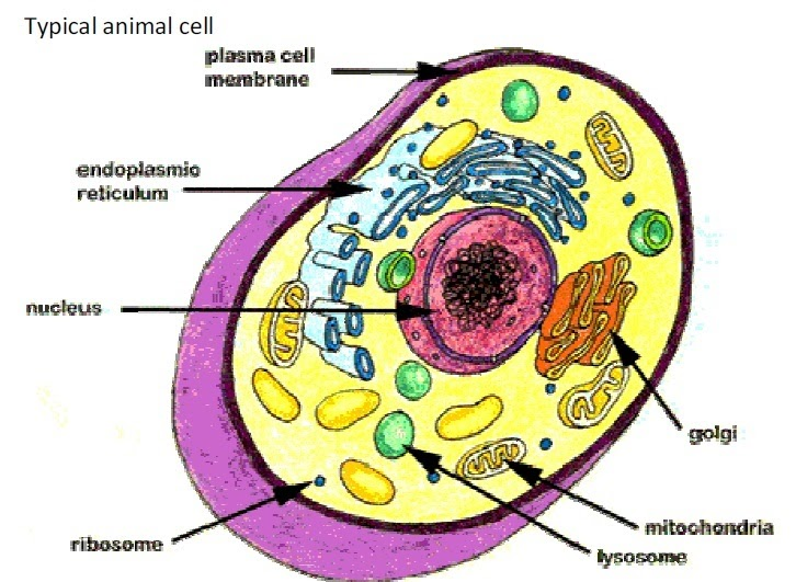 CLASS 9- BIOLOGY-Solved Test Paper: THE FUNDAMENTAL UNIT ...