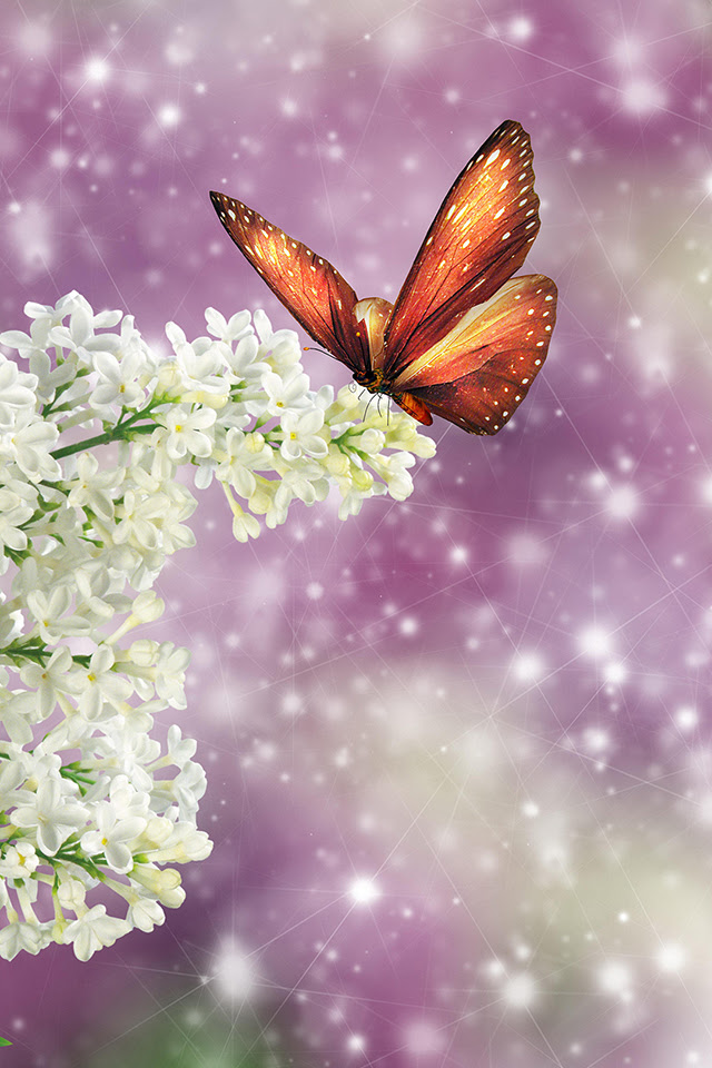 Spring Butterfly iPhone Wallpaper HD