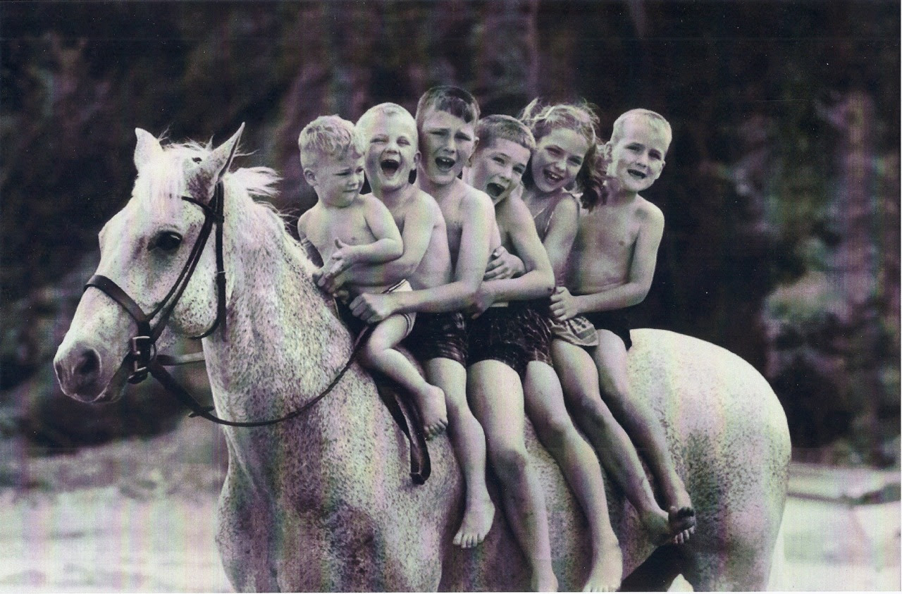 """mordmardok:  """"(1949-1974) Snowman, an older grey plow horse, was rescued off a slaughter bound trailer by Harry DeLeyer, a life-long horse lover/rider/trainer. He instantly recognized Snowman to be one of the kindest and sweetest beginner horses he had ever seen. Little did he know that Snowman would become a jumping champion who'd win the National Horse Show against million dollar horses that had been imported from around the world."""" http://sidelinesnews.com/weekly-featured/harry-de-leyer-and-snowman-a-cinderella-story-becomes-a-film.html"""