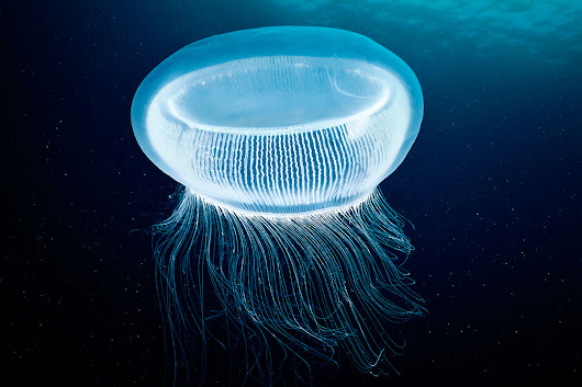 Fluorescent jellyfish proteins light up unconventional laser