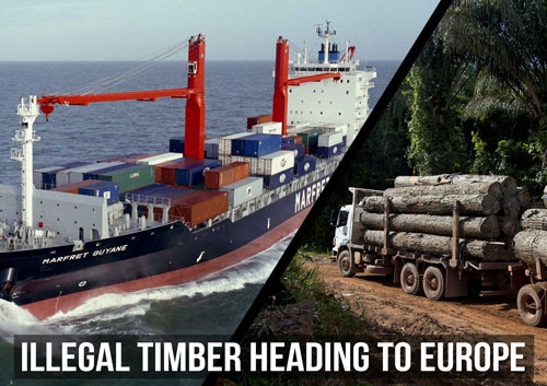 URGENT: Days to stop illegal Amazon timber coming into Europe!