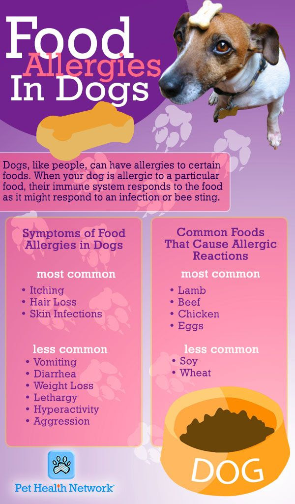 Enjoy Your Pets Without the Allergy Symptoms
