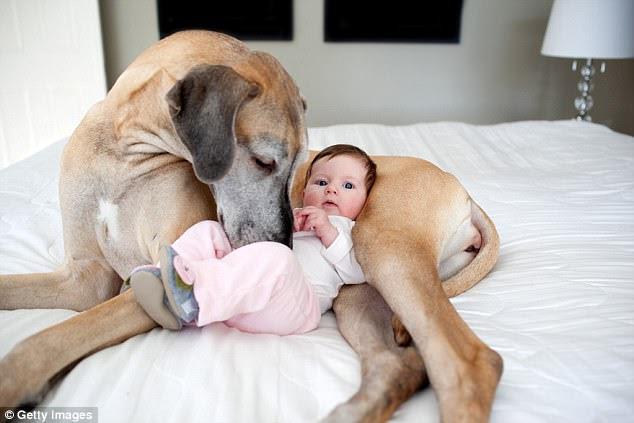 Nếu có ý định nuôi chó thì làm ngay đi. Bởi vì... - Ảnh 1.