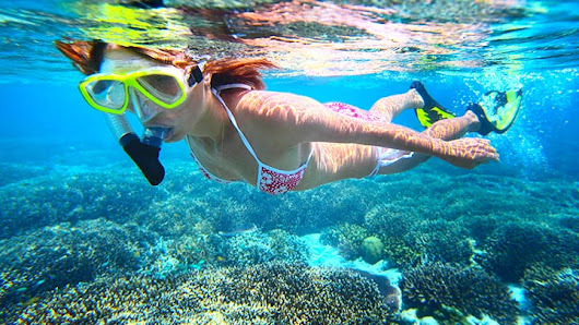 Best Grand Bahama Island Snorkeling - Top 11 Grand Bahama Island Snorkel Dives