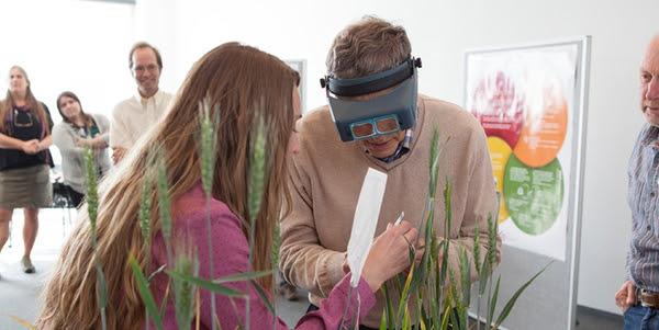 Bill Gates at Cornell University, trying to cross-pollinate wheat. (Photo: Cornell University)