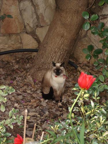 Cat, tulip, tree