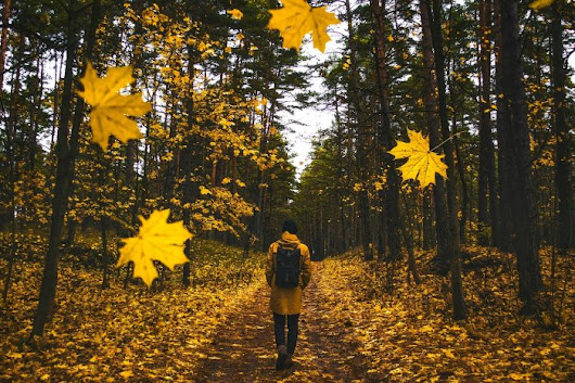 Time To Ponder Fall Promotions | Gossett Marketing