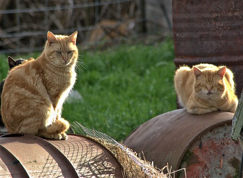Two Feral Cats ...and...