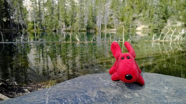 Rover at Grassi Lakes