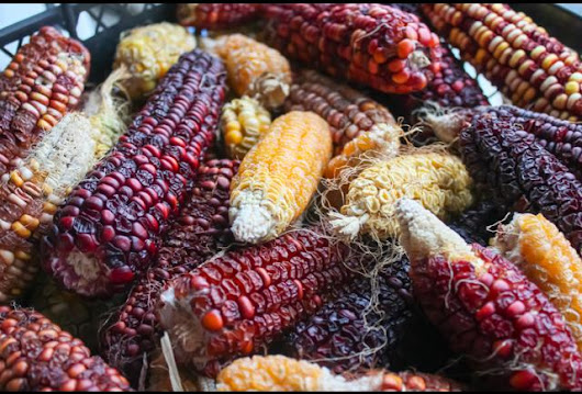 The Man Who Imports Corn (And How He's Saving Mexican Food)