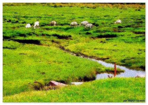 Paisaje con ovejas