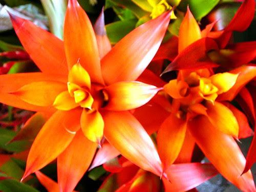 market bromeliads