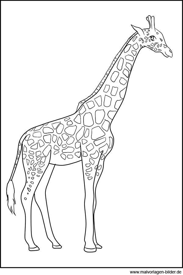 ausmalbilder giraffen ausgewachsene giraffe giraffe 1