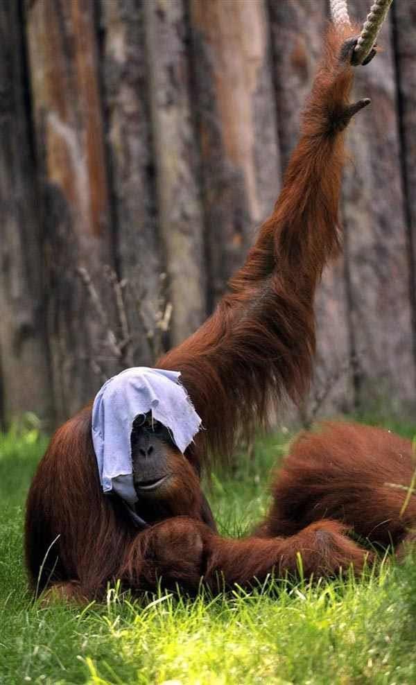 חיות ברגע הנכון - תמונות מדהימות!