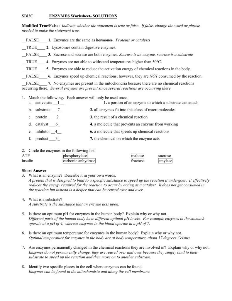 Enzymes Worksheet High School With Answer. Enzymes. Best Free Printable Worksheets