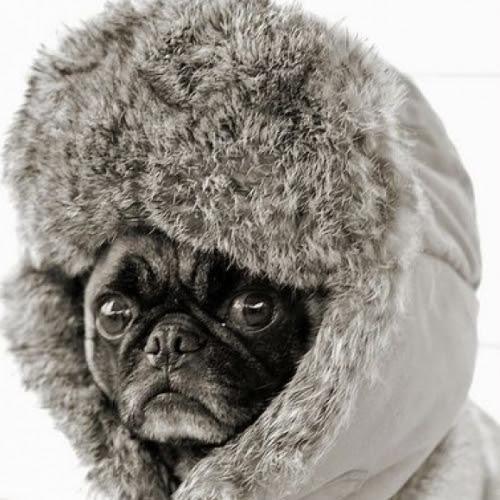 warm6_dog