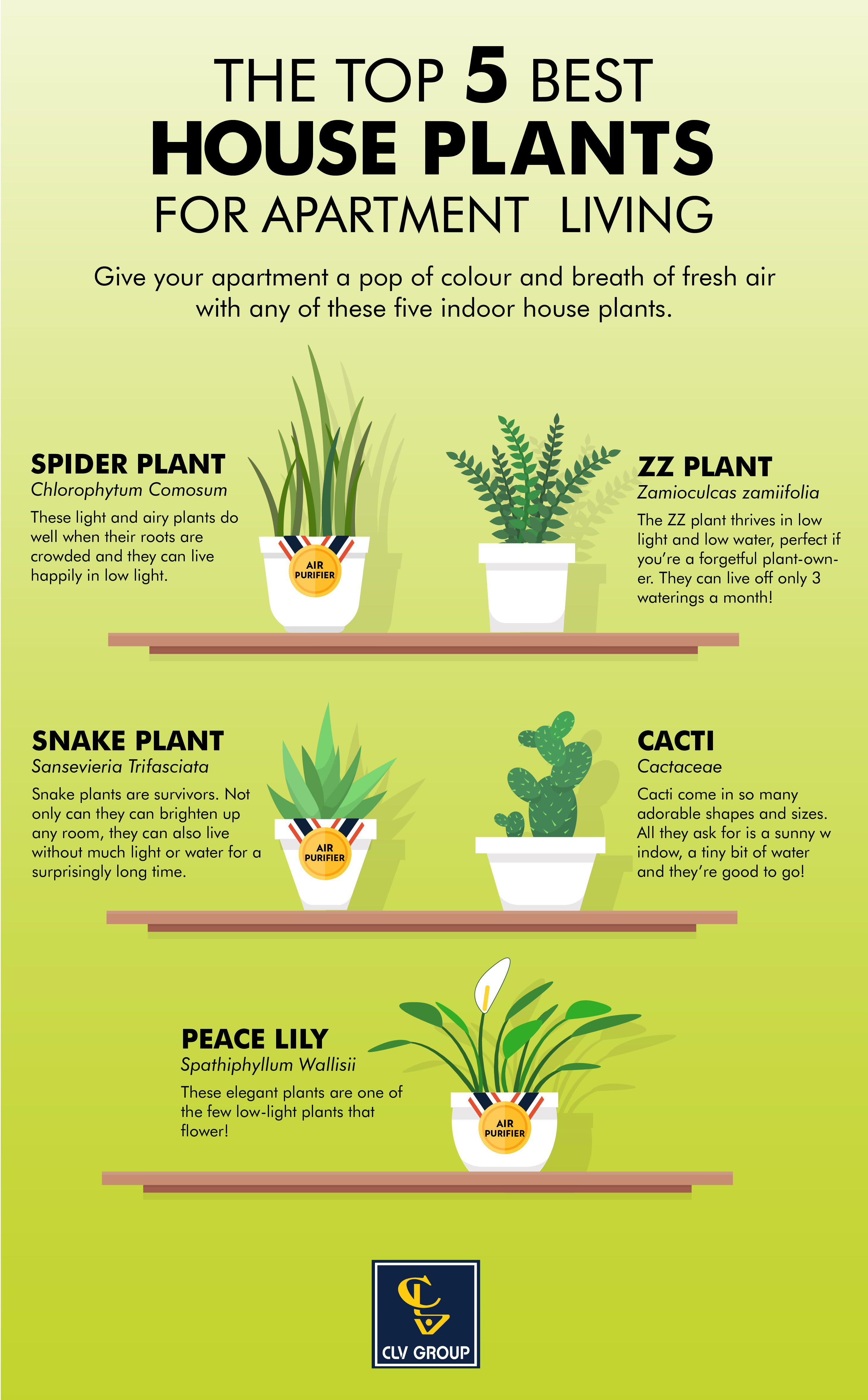 Top 5 Best Houseplants For Apartment Living Infographic