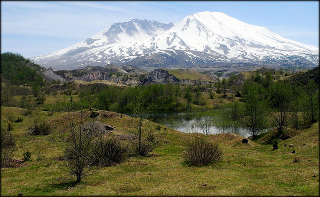 Life slowly starting to return to what was once a barren wasteland - Mt St Helens