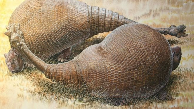 illustration of glyptodonts